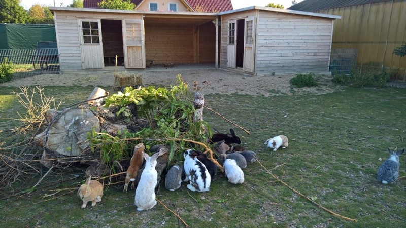 Kaninchenreich auf 400 qm